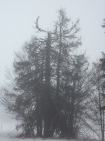 feldberg_20121215_004
