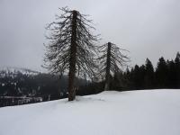 feldberg_20120311_009