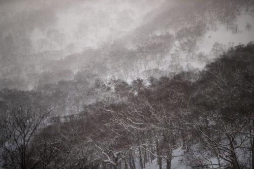 Die Wälder von Annupuri