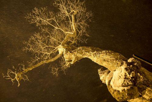 Wälder in der Nacht
