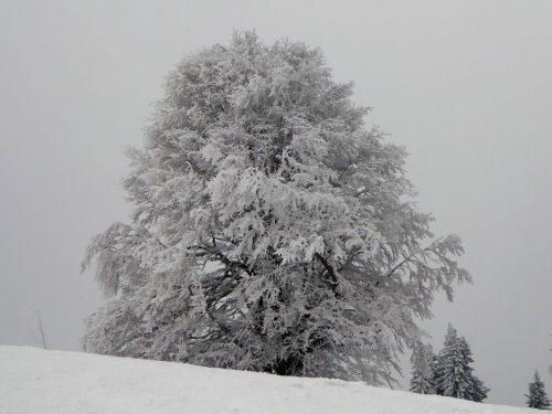 Winterbaum am Zeller 2